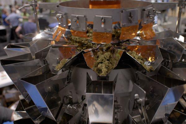 yamato-cannabis-scale(3)